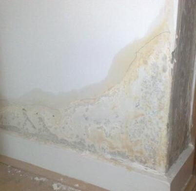 Damp Proofing Creams