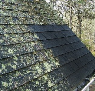 Clean Roof Slates With Organic Moss And Algae Remover.