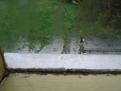 Mildew Mould Growth Caused By Condensation