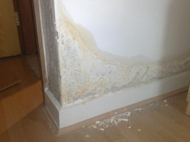 Rising Damp Staining Patching